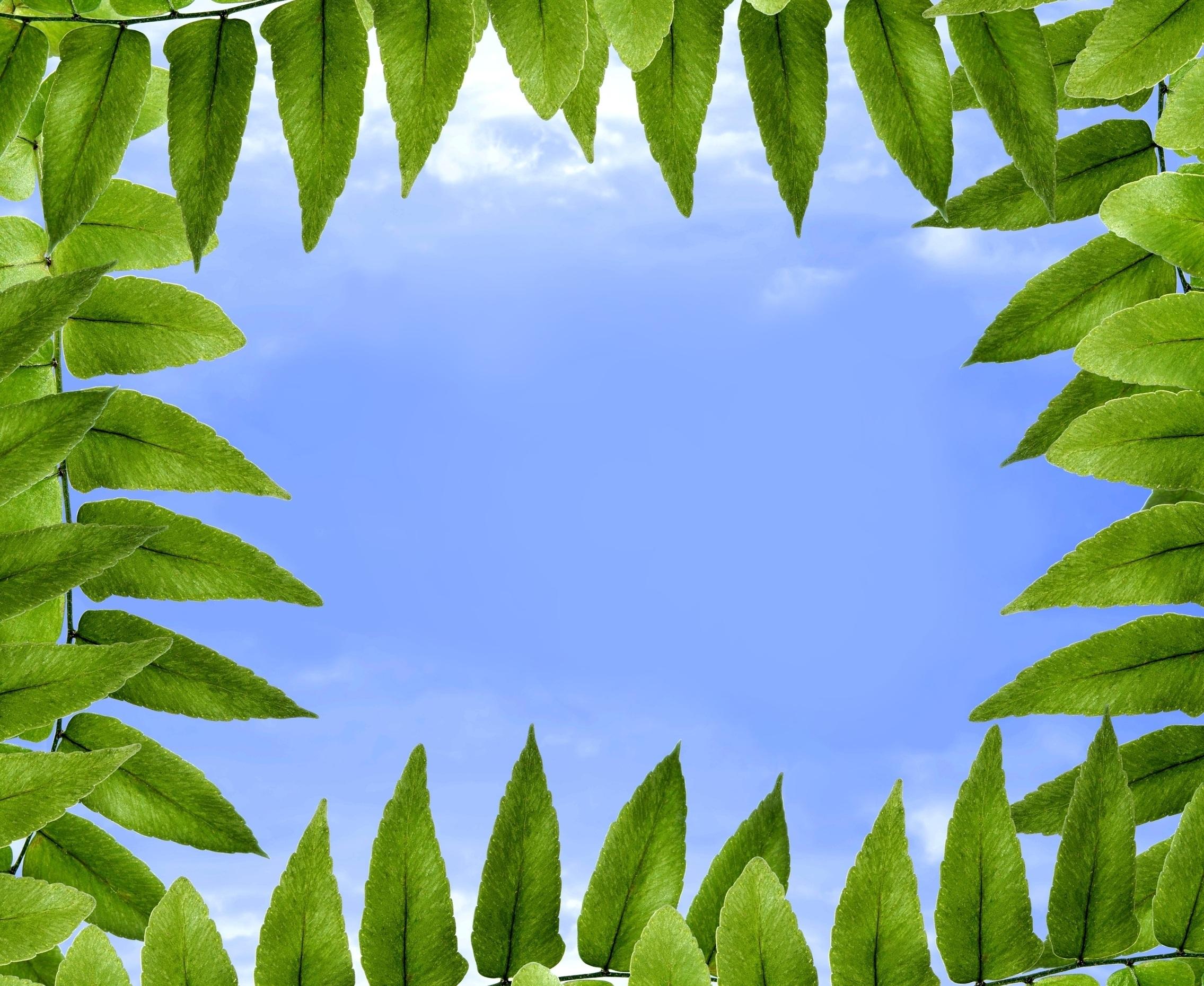 foliage-1278760