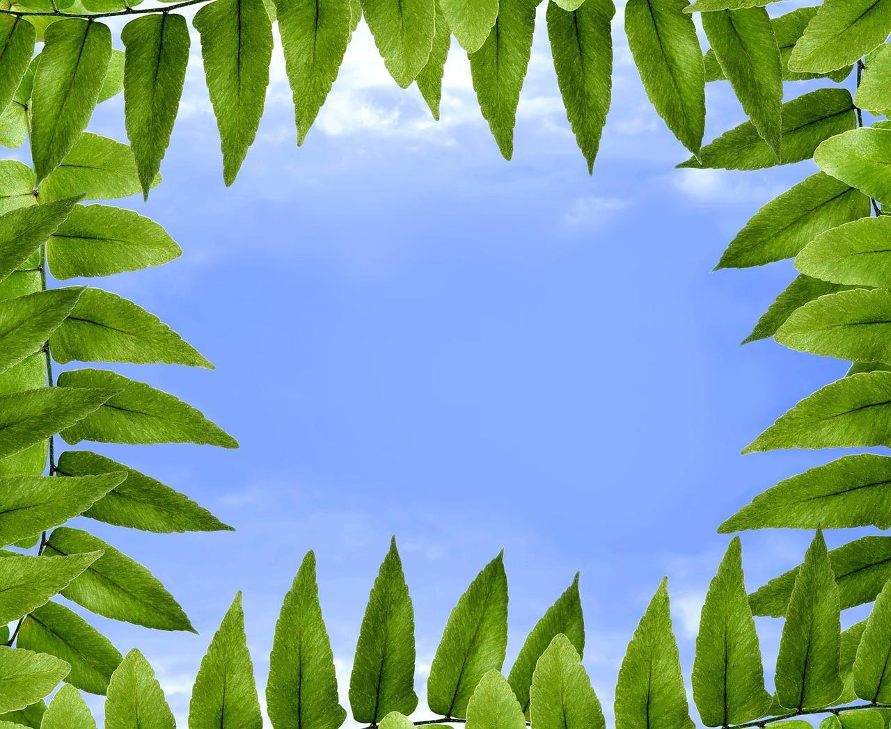 foliage-1278760_1280
